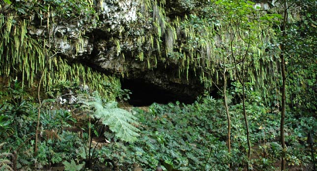 Kauai's Famous Fern Grotto