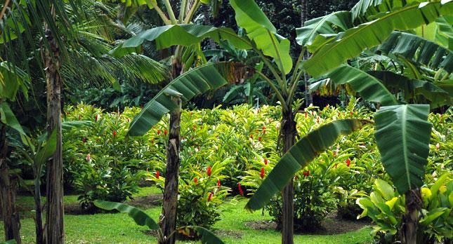 Smith's Gardens on Kauai