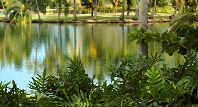Smith's Wailua Ponds